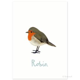 Birth card 'Robin'