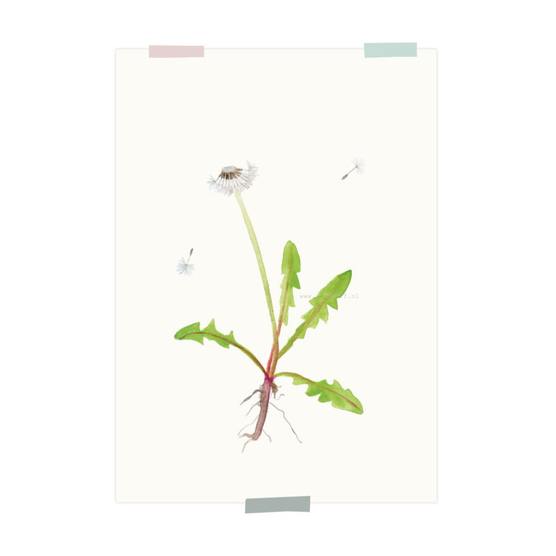 print | Paardenbloem