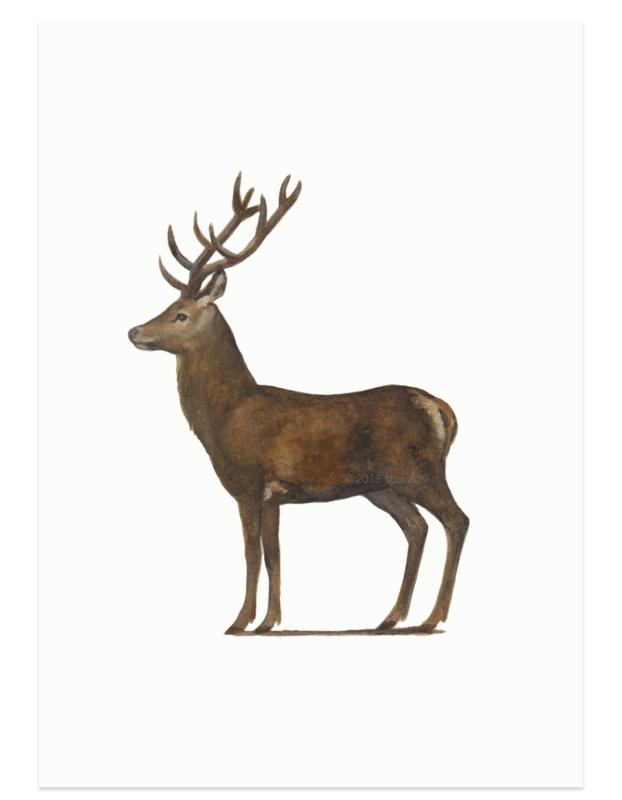Red deer male