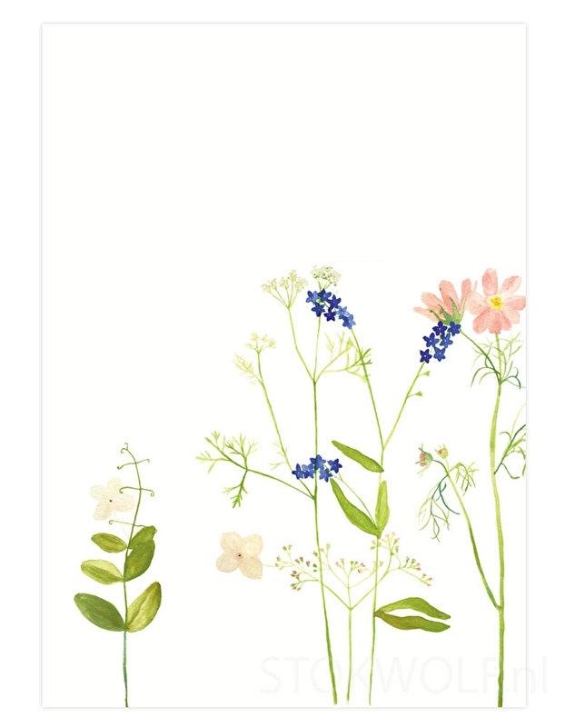 postkaart 'Cosmea'