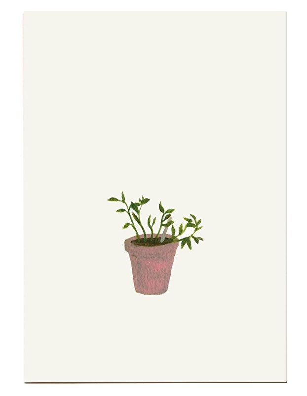 postcard 'Oregano'