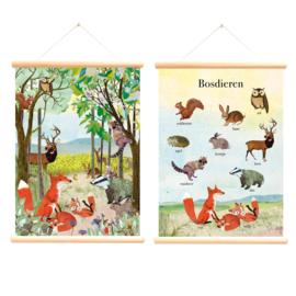 Schoolplaat Bosdieren Grootzus - Poster op houten rol