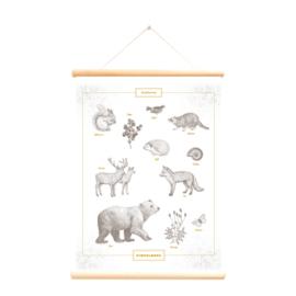 Schoolplaat Bosdieren - Pimpelmees - Poster op houten rol