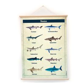 Schoolplaat Haaien - Kinderkamer poster op houten rol
