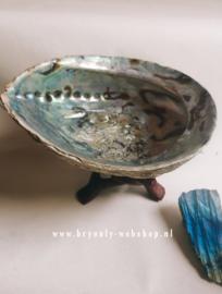 Abalone smudgeschelp uit Nieuw Zeeland XL