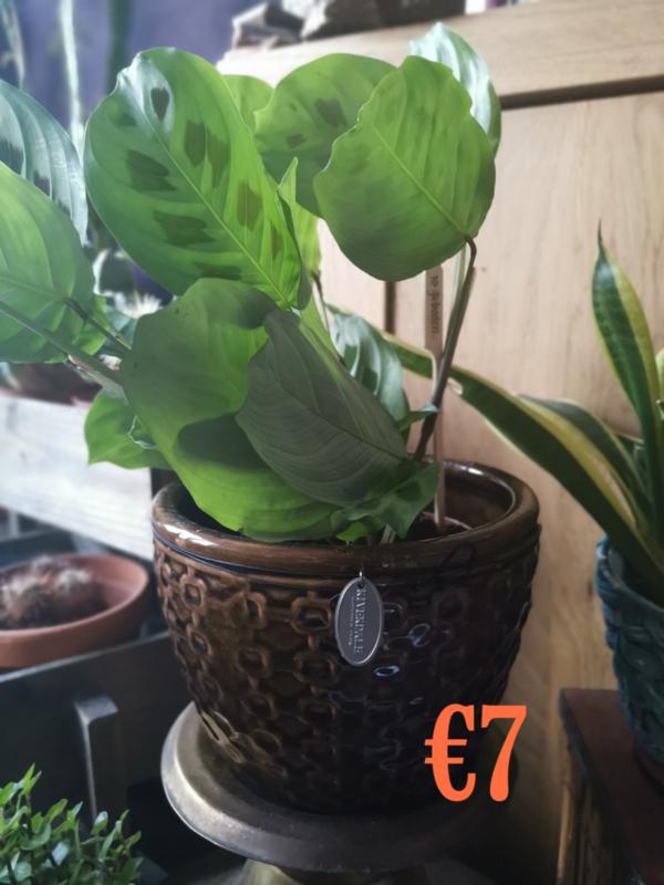 Riverdale plantenpot 17,5 cm