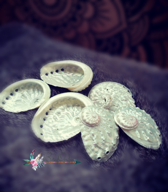 Abalone schelp wit parelmoer small