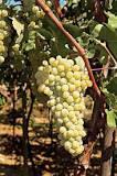 Vidiano droge witte wijn 750 ml per fles