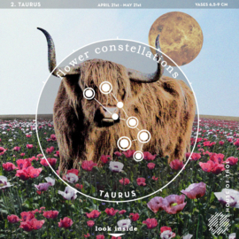 Flower Constellations - Taurus (21/4-21/5)