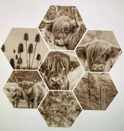 Set hexagon
