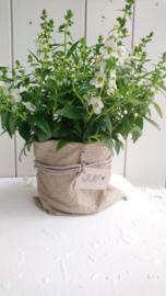 Plantbag small zand 4 st.