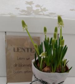 Sachet bloemenzaad LENTE  naturel 6 st.