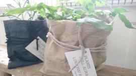 Paper plantbag antraciet-zwart 4 st.