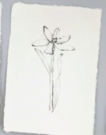 Kaart A5 Narcis 4st.