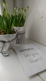 Sachet bloemenzaad SPRING wit 6 st.