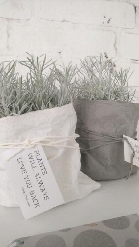 Paper plantbag off-white 4 st.