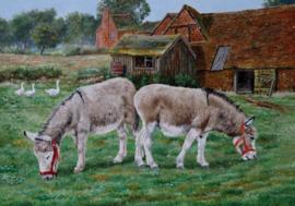 Wenskaart Donkey Sanctuary