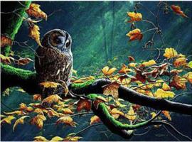 Wenskaart Tawny Owl