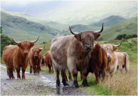 Wenskaart The Highlanders