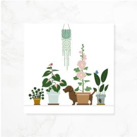 Wenskaart teckel Frits - Tussen het groen (blanco)