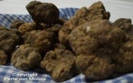 Witte Truffel (Groot)
