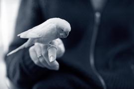 8 november :Vogel informatie avond door  Din van Nieuwenhuijzen
