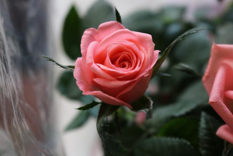 50 afbeeldingen van bloemen