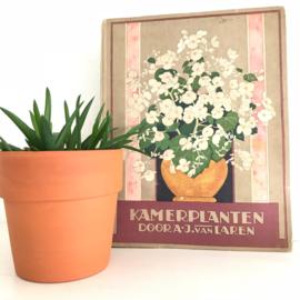 """Vintage boek """"kamerplanten""""door A.J. van Laren"""