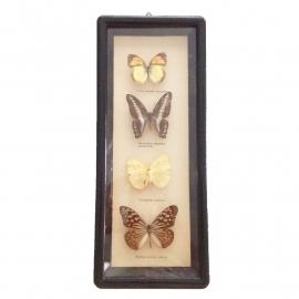Vintage vlinderkastje( Taxidermy) nr. 3