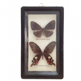 Vintage vlinderkastje ( Taxidermy)nr. 2