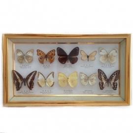 Vintage vlinderkastje( Taxidermy) nr. 1