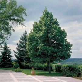 Bomen T-V