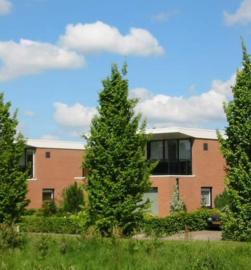 Carpinus betulus - Haagbeuk -