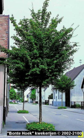 Bomen A -C