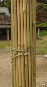 Bamboe/Tonkin stokken 180 cm Lei- en Dakbomen