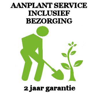 Aanplant Service per boom