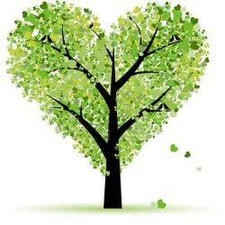 Bomen online kopen. Acer, Alnus, Amelanchier, Carpinus en Cercidiphyllum