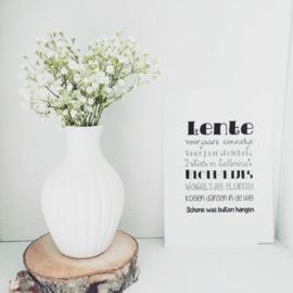 A5 | Lente (sale)
