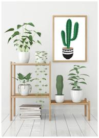 A6 | Cactus 3