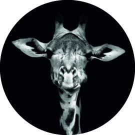Wandcirkel - Giraffe (foto)