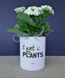 BLOEMPOTJE -  I wet my plants