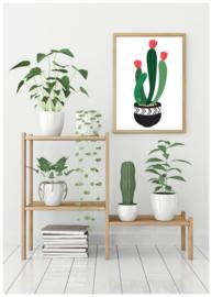 A6 | Cactus 2