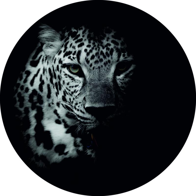 Wandcirkel - Cheetah (foto)