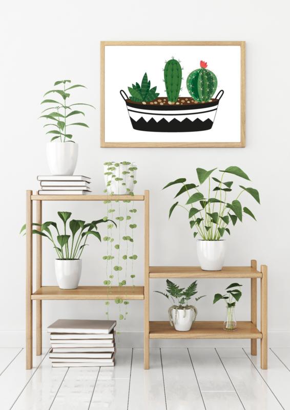 A6 | Cactus 4