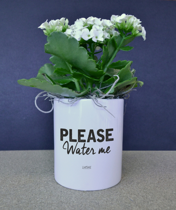 BLOEMPOTJE -  Please water me