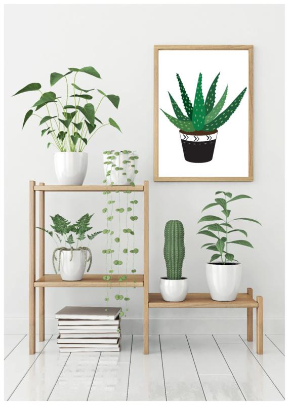 A6 | Cactus 1