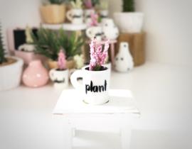 Woonkamer | Planten | in een kopje | roze