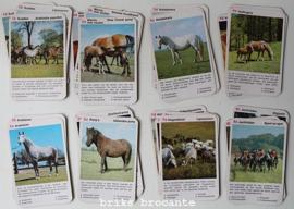Paarden kwartet