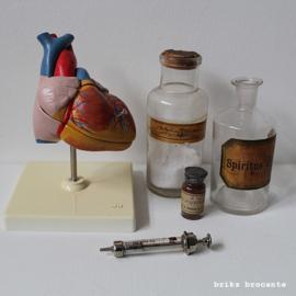 anatomisch model hart