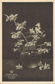 prent orchidee
